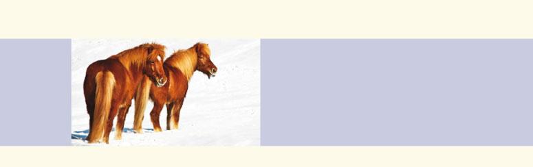 Stassek DIVERSIT - Equidoux Tinktur gegen Scheuern www.stassek.com